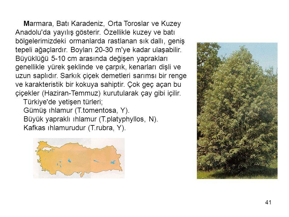 41 Marmara, Batı Karadeniz, Orta Toroslar ve Kuzey Anadolu da yayılış gösterir.