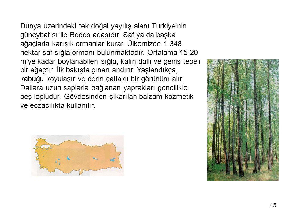 43 Dünya üzerindeki tek doğal yayılış alanı Türkiye nin güneybatısı ile Rodos adasıdır.