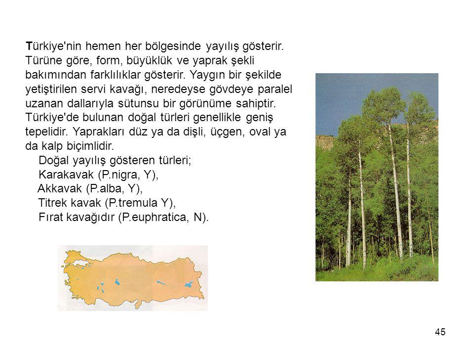 45 Türkiye nin hemen her bölgesinde yayılış gösterir.
