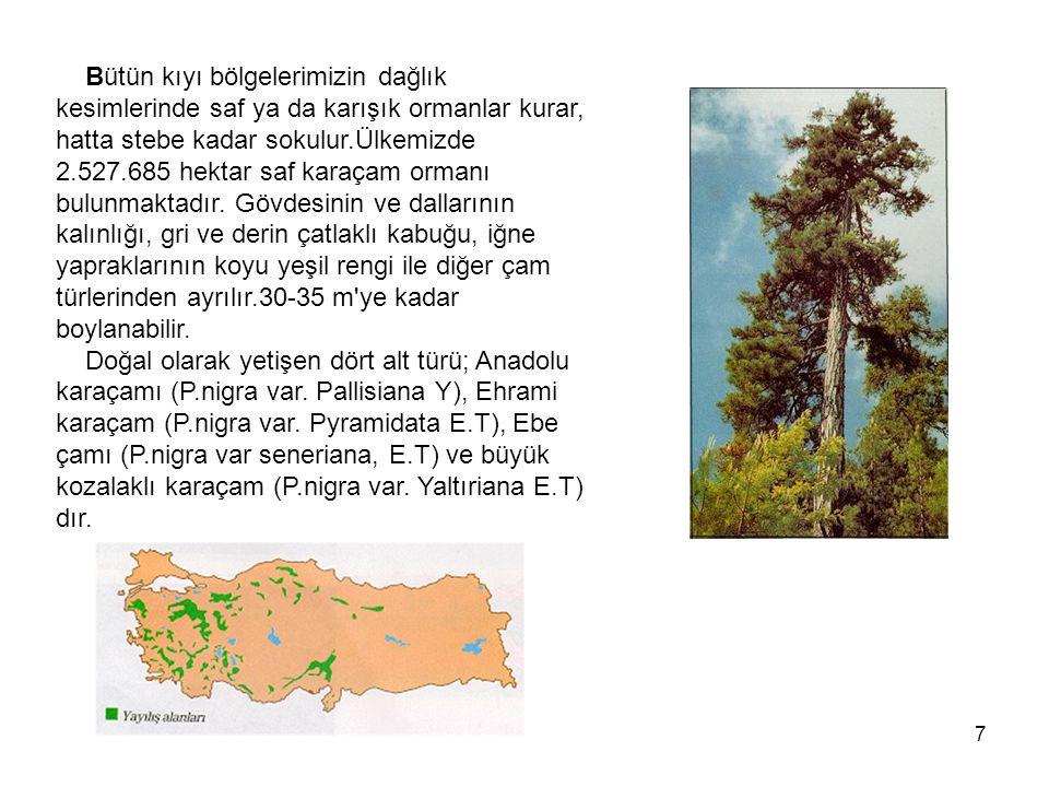 7 Bütün kıyı bölgelerimizin dağlık kesimlerinde saf ya da karışık ormanlar kurar, hatta stebe kadar sokulur.Ülkemizde 2.527.685 hektar saf karaçam ormanı bulunmaktadır.