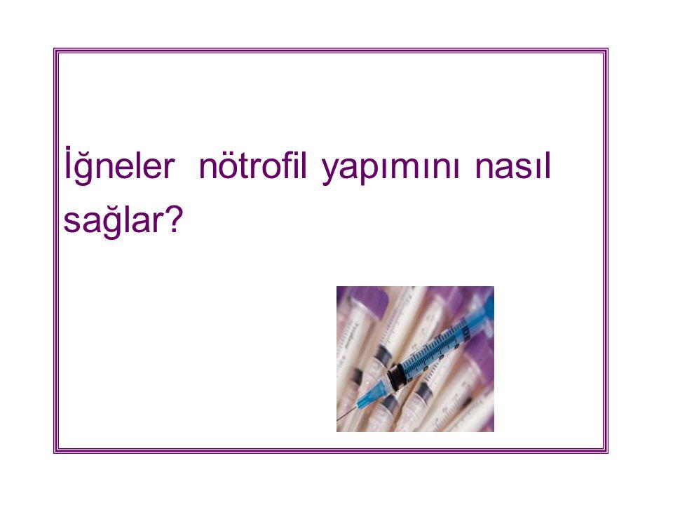 İğneler nötrofil yapımını nasıl sağlar?