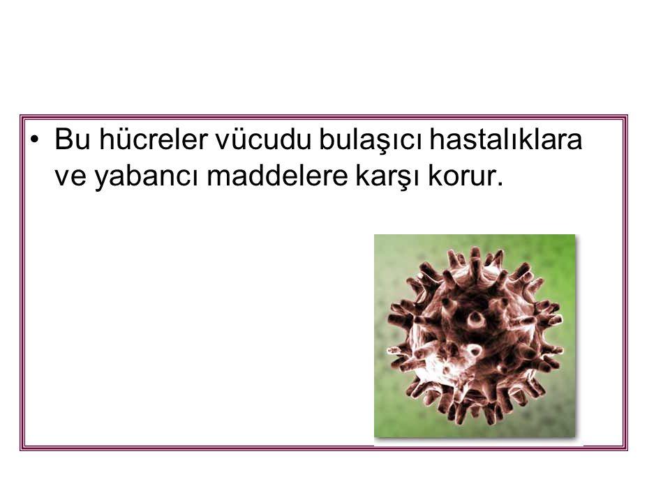 •Bu hücreler vücudu bulaşıcı hastalıklara ve yabancı maddelere karşı korur.