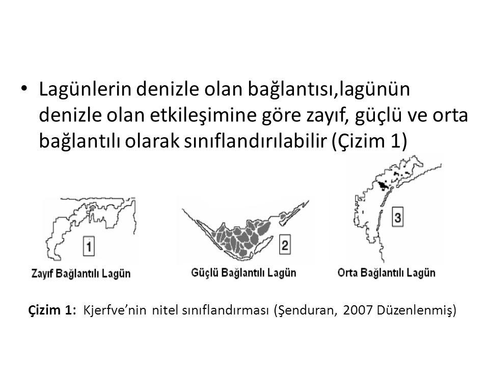 • Lagünlerin denizle olan bağlantısı,lagünün denizle olan etkileşimine göre zayıf, güçlü ve orta bağlantılı olarak sınıflandırılabilir (Çizim 1) (Şenduran, 2007).