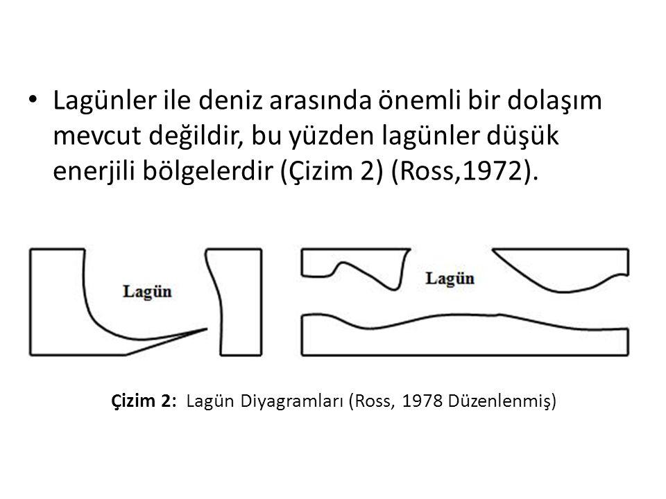 • Lagünler ile deniz arasında önemli bir dolaşım mevcut değildir, bu yüzden lagünler düşük enerjili bölgelerdir (Çizim 2) (Ross,1972).