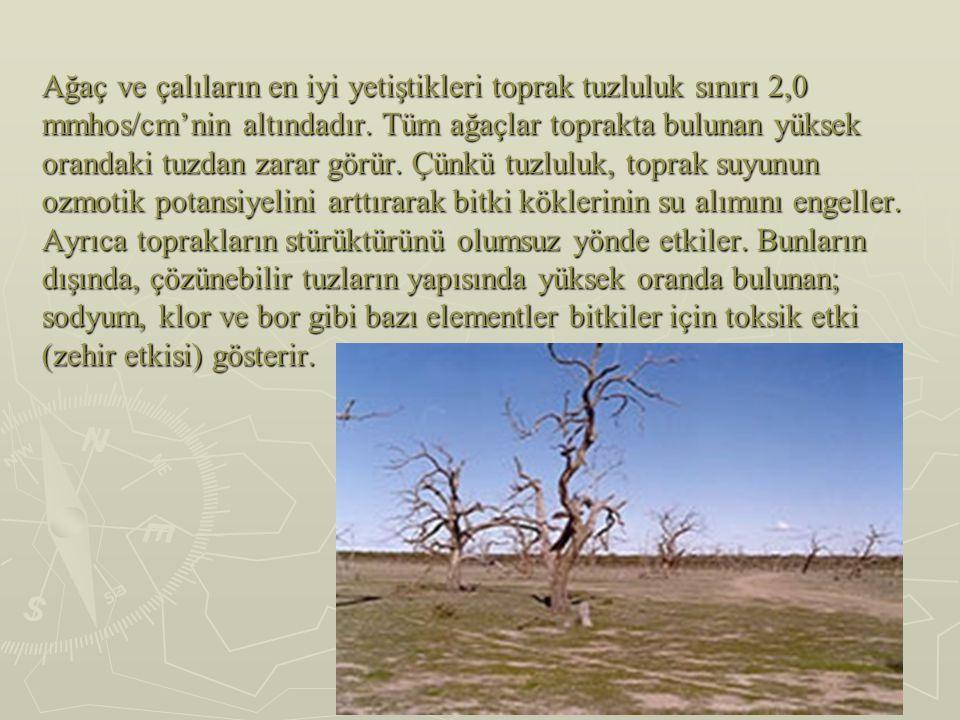 Ağaç ve çalıların en iyi yetiştikleri toprak tuzluluk sınırı 2,0 mmhos/cm'nin altındadır. Tüm ağaçlar toprakta bulunan yüksek orandaki tuzdan zarar gö