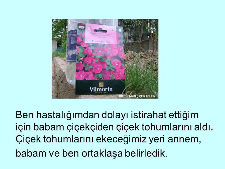 Ben hastalığımdan dolayı istirahat ettiğim için babam çiçekçiden çiçek tohumlarını aldı. Çiçek tohumlarını ekeceğimiz yeri annem, babam ve ben ortakla