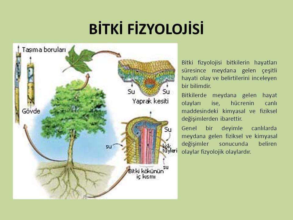 BİTKİ FİZYOLOJİSİ Bitki fizyolojisi bitkilerin hayatları süresince meydana gelen çeşitli hayati olay ve belirtilerini inceleyen bir bilimdir. Bitkiler