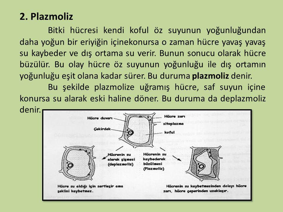 2. Plazmoliz Bitki hücresi kendi koful öz suyunun yoğunluğundan daha yoğun bir eriyiğin içinekonursa o zaman hücre yavaş yavaş su kaybeder ve dış orta