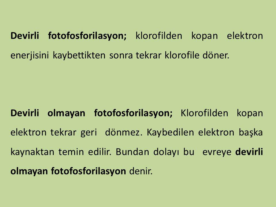 Devirli fotofosforilasyon; klorofilden kopan elektron enerjisini kaybettikten sonra tekrar klorofile döner. Devirli olmayan fotofosforilasyon; Klorofi