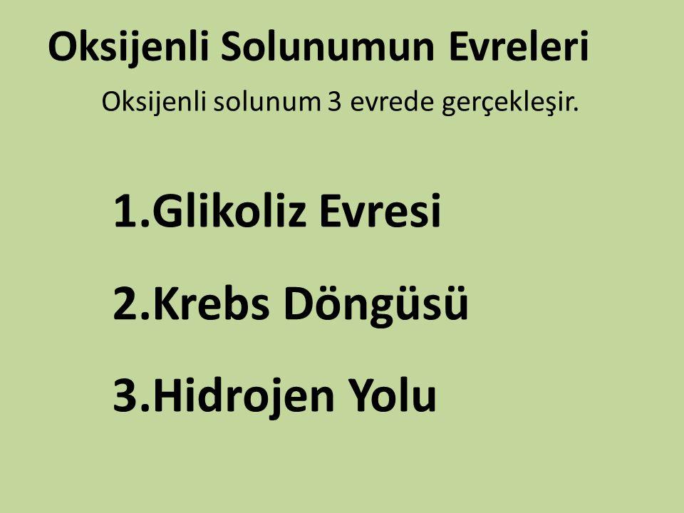 Oksijenli Solunumun Evreleri Oksijenli solunum 3 evrede gerçekleşir. 1.Glikoliz Evresi 2.Krebs Döngüsü 3.Hidrojen Yolu