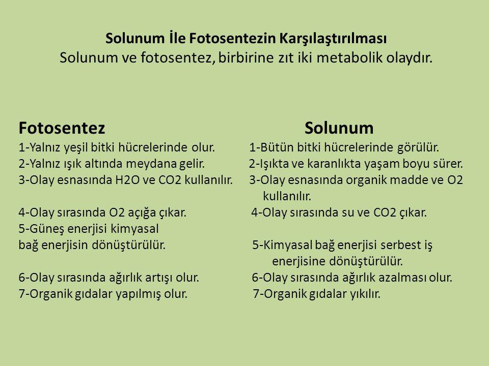 Solunum İle Fotosentezin Karşılaştırılması Solunum ve fotosentez, birbirine zıt iki metabolik olaydır. Fotosentez Solunum 1-Yalnız yeşil bitki hücrele