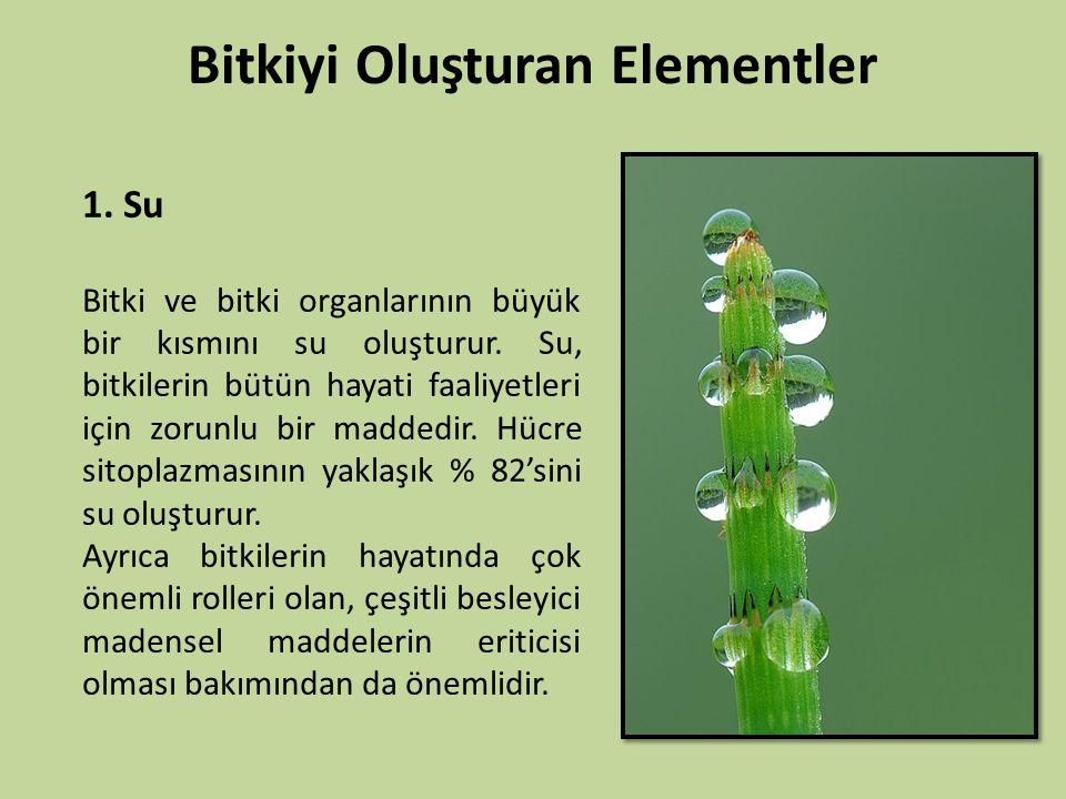 Bitkiyi Oluşturan Elementler 1. Su Bitki ve bitki organlarının büyük bir kısmını su oluşturur. Su, bitkilerin bütün hayati faaliyetleri için zorunlu b