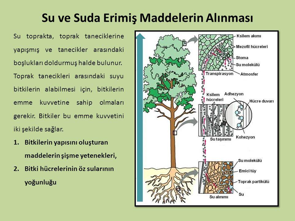 Su ve Suda Erimiş Maddelerin Alınması Su toprakta, toprak taneciklerine yapışmış ve tanecikler arasındaki boşlukları doldurmuş halde bulunur. Toprak t
