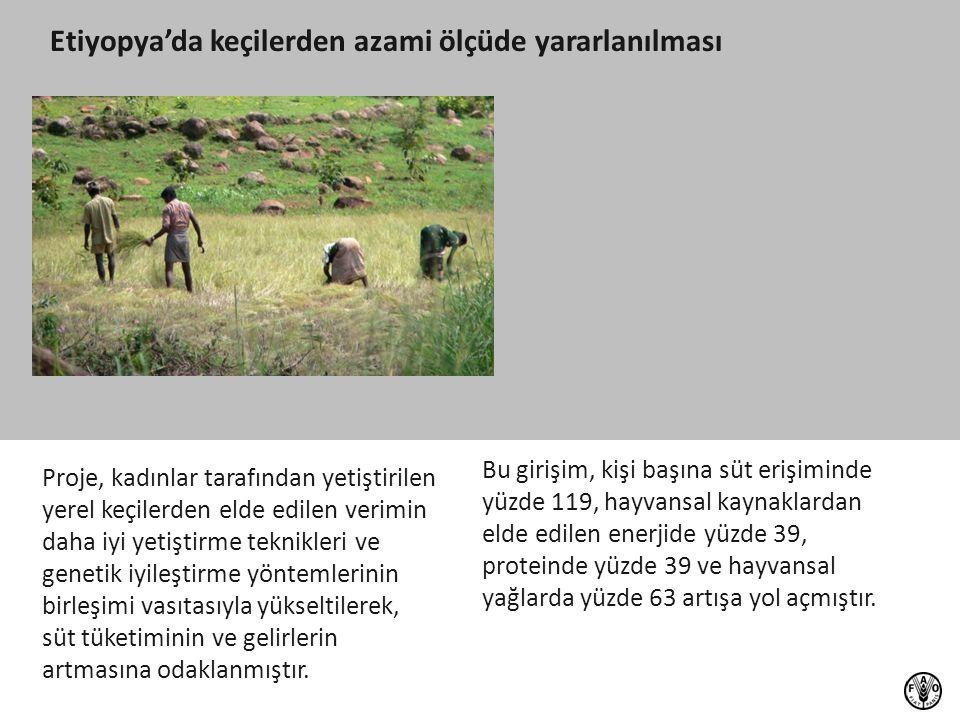 Proje, kadınlar tarafından yetiştirilen yerel keçilerden elde edilen verimin daha iyi yetiştirme teknikleri ve genetik iyileştirme yöntemlerinin birle