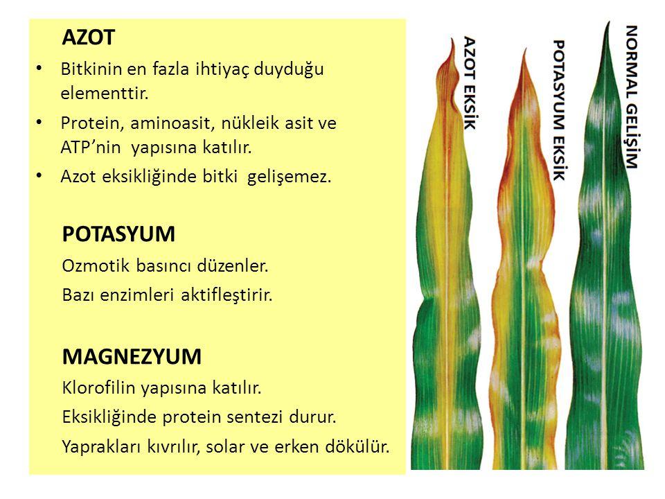 KLOR • Klor bitkilerde iyon olarak bulunur.• Fotosentez ve hücre bölünmesinde rol alır.