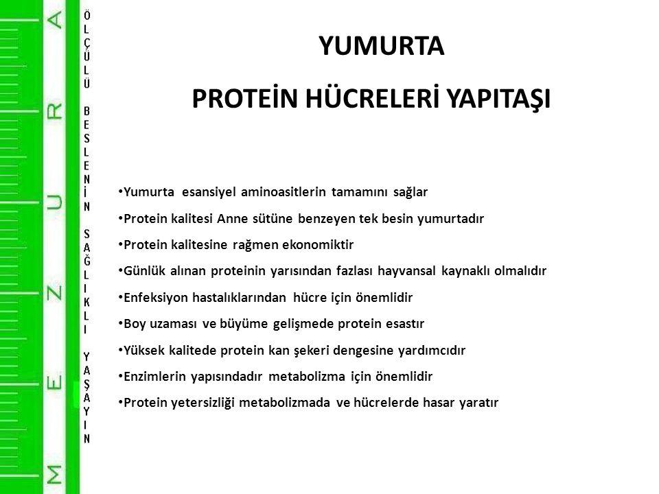 YUMURTA PROTEİN HÜCRELERİ YAPITAŞI • Yumurta esansiyel aminoasitlerin tamamını sağlar • Protein kalitesi Anne sütüne benzeyen tek besin yumurtadır • Protein kalitesine rağmen ekonomiktir • Günlük alınan proteinin yarısından fazlası hayvansal kaynaklı olmalıdır • Enfeksiyon hastalıklarından hücre için önemlidir • Boy uzaması ve büyüme gelişmede protein esastır • Yüksek kalitede protein kan şekeri dengesine yardımcıdır • Enzimlerin yapısındadır metabolizma için önemlidir • Protein yetersizliği metabolizmada ve hücrelerde hasar yaratır