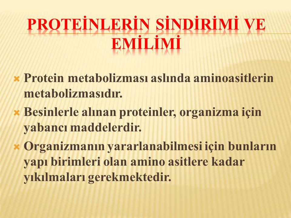  Protein metabolizması aslında aminoasitlerin metabolizmasıdır.  Besinlerle alınan proteinler, organizma için yabancı maddelerdir.  Organizmanın ya