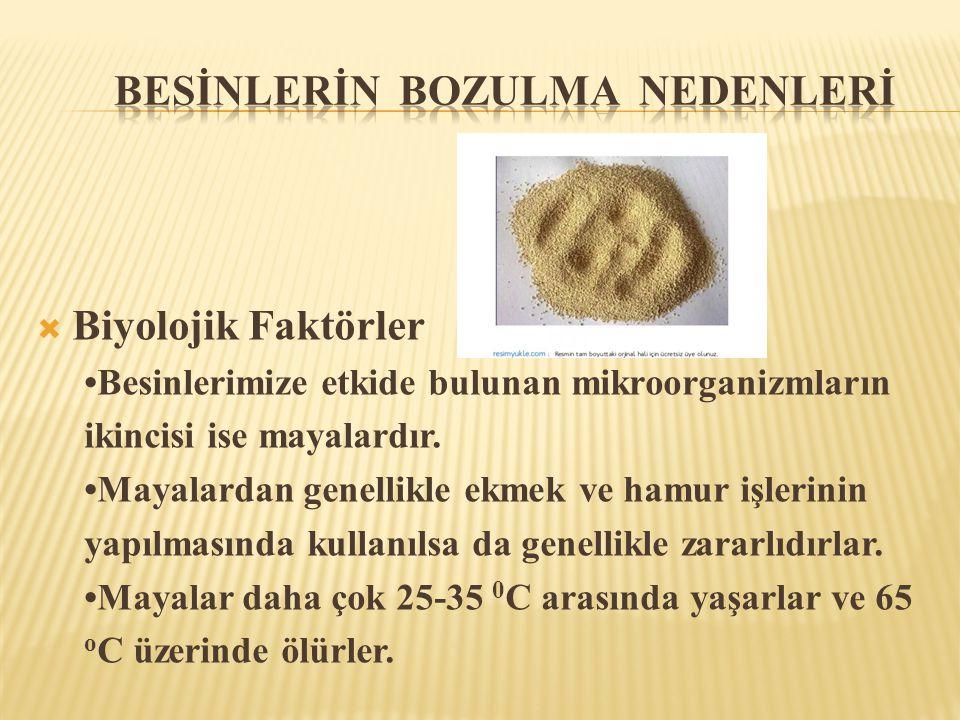  Biyolojik Faktörler •Besinlerimize etkide bulunan mikroorganizmların ikincisi ise mayalardır. •Mayalardan genellikle ekmek ve hamur işlerinin yapılm