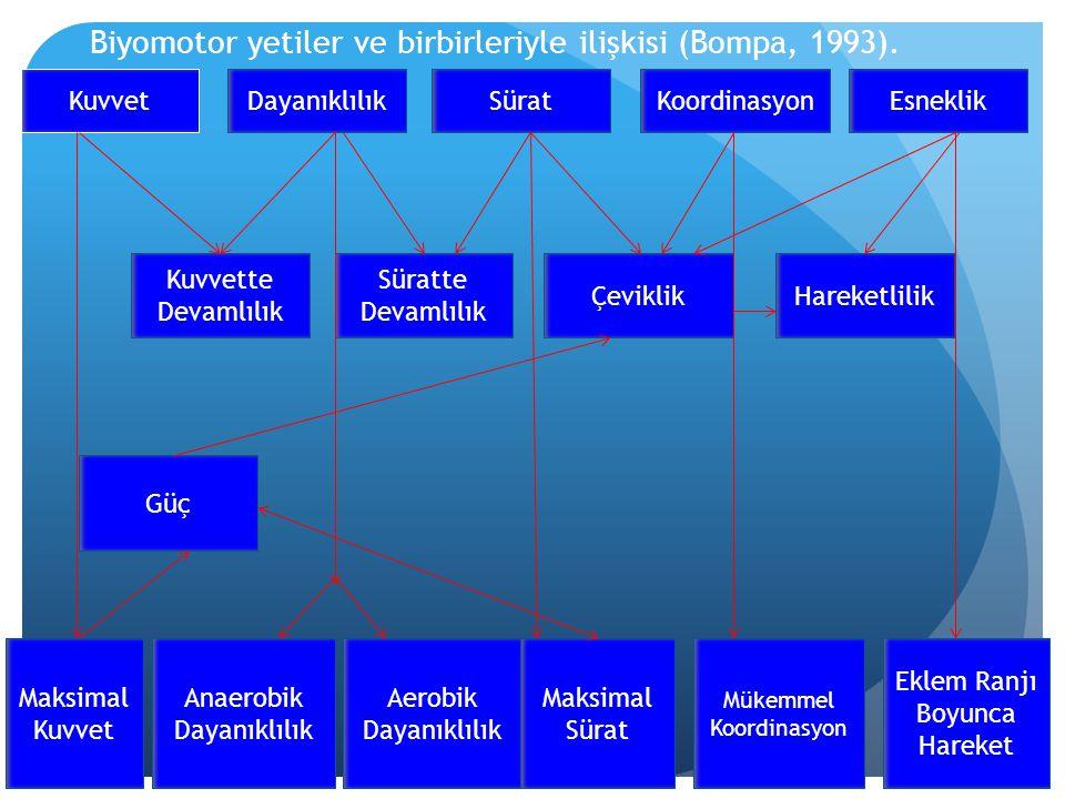 Biyomotor yetiler ve birbirleriyle ilişkisi (Bompa, 1993). KuvvetDayanıklılıkSüratKoordinasyonEsneklik Kuvvette Devamlılık Süratte Devamlılık Çeviklik