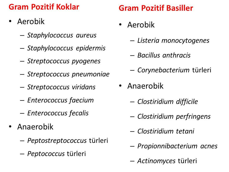 Gram Pozitif Koklar • Aerobik – Staphylococcus aureus – Staphylococcus epidermis – Streptococcus pyogenes – Streptococcus pneumoniae – Streptococcus v