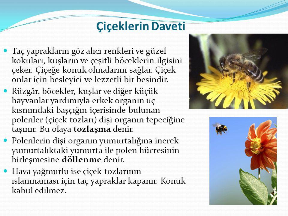 Çiçeklerin Daveti  Taç yaprakların göz alıcı renkleri ve güzel kokuları, kuşların ve çeşitli böceklerin ilgisini çeker. Çiçeğe konuk olmalarını sağla