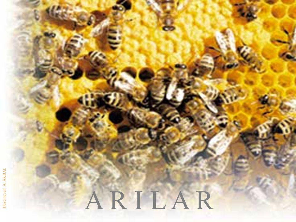 500 gram bal için arılar, 3 milyon 750 bin defa çiçege konup kalkıyor.