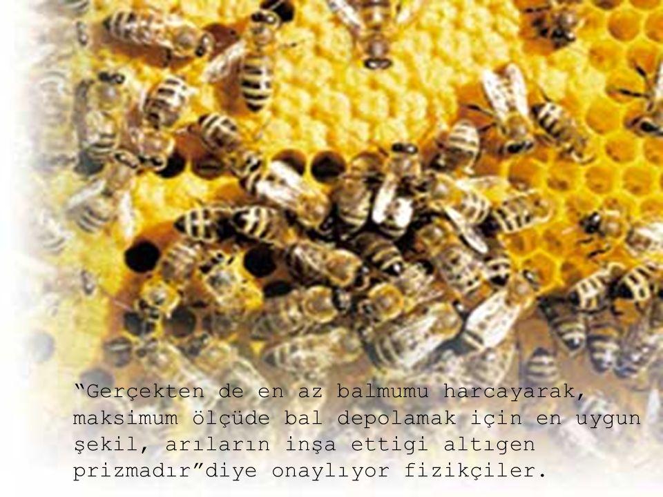 """""""Gerçekten de en az balmumu harcayarak, maksimum ölçüde bal depolamak için en uygun şekil, arıların inşa ettigi altıgen prizmadır""""diye onaylıyor fizik"""
