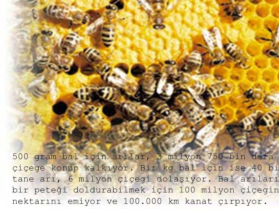 500 gram bal için arılar, 3 milyon 750 bin defa çiçege konup kalkıyor. Bir kg bal için ise 40 bin tane arı, 6 milyon çiçegi dolaşıyor. Bal arıları bir