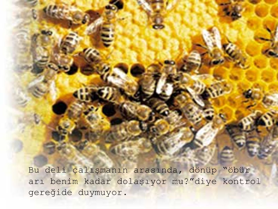 """Bu deli çalışmanın arasında, dönüp """"öbür arı benim kadar dolaşıyor mu?""""diye kontrol gereğide duymuyor."""