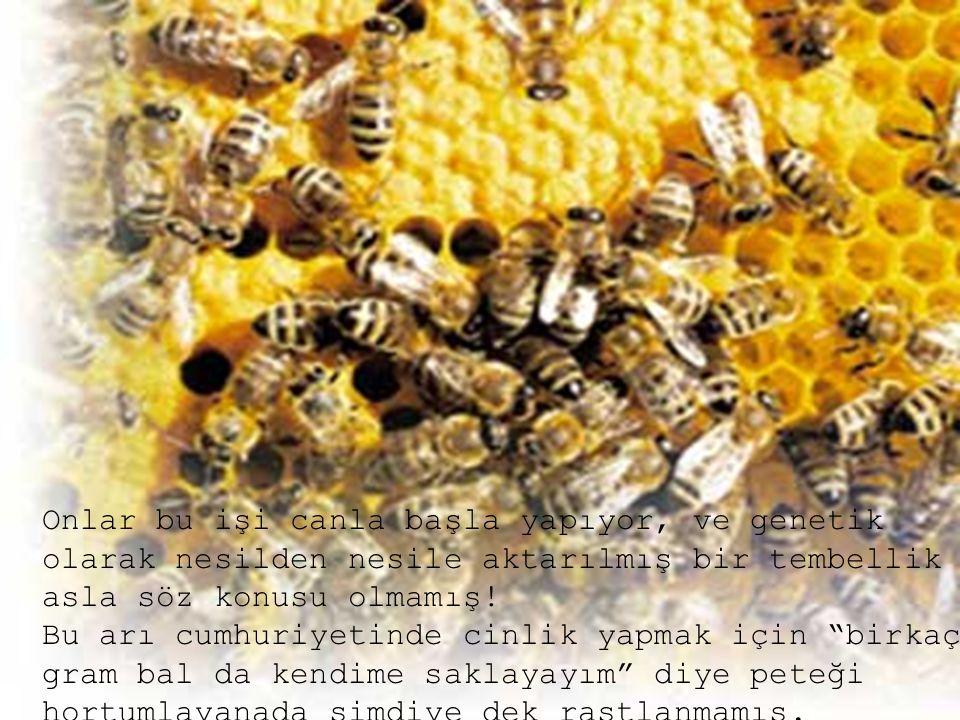 Onlar bu işi canla başla yapıyor, ve genetik olarak nesilden nesile aktarılmış bir tembellik asla söz konusu olmamış! Bu arı cumhuriyetinde cinlik yap