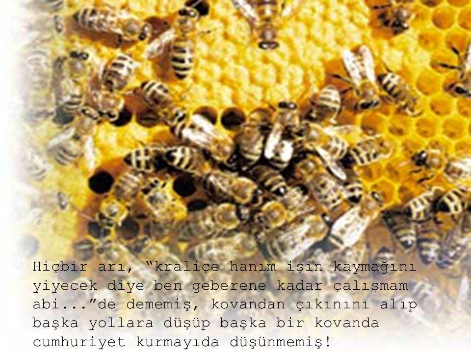"""Hiçbir arı, """"kraliçe hanım işin kaymağını yiyecek diye ben geberene kadar çalışmam abi...""""de dememiş, kovandan çıkınını alıp başka yollara düşüp başka"""