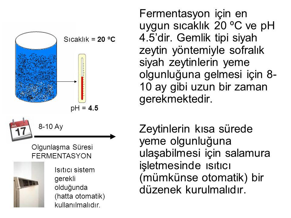 Fermentasyon için en uygun sıcaklık 20 ºC ve pH 4.5'dir. Gemlik tipi siyah zeytin yöntemiyle sofralık siyah zeytinlerin yeme olgunluğuna gelmesi için