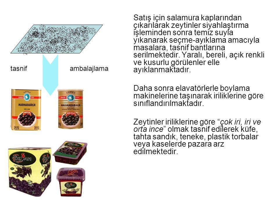 Satış için salamura kaplarından çıkarılarak zeytinler siyahlaştırma işleminden sonra temiz suyla yıkanarak seçme-ayıklama amacıyla masalara, tasnif ba