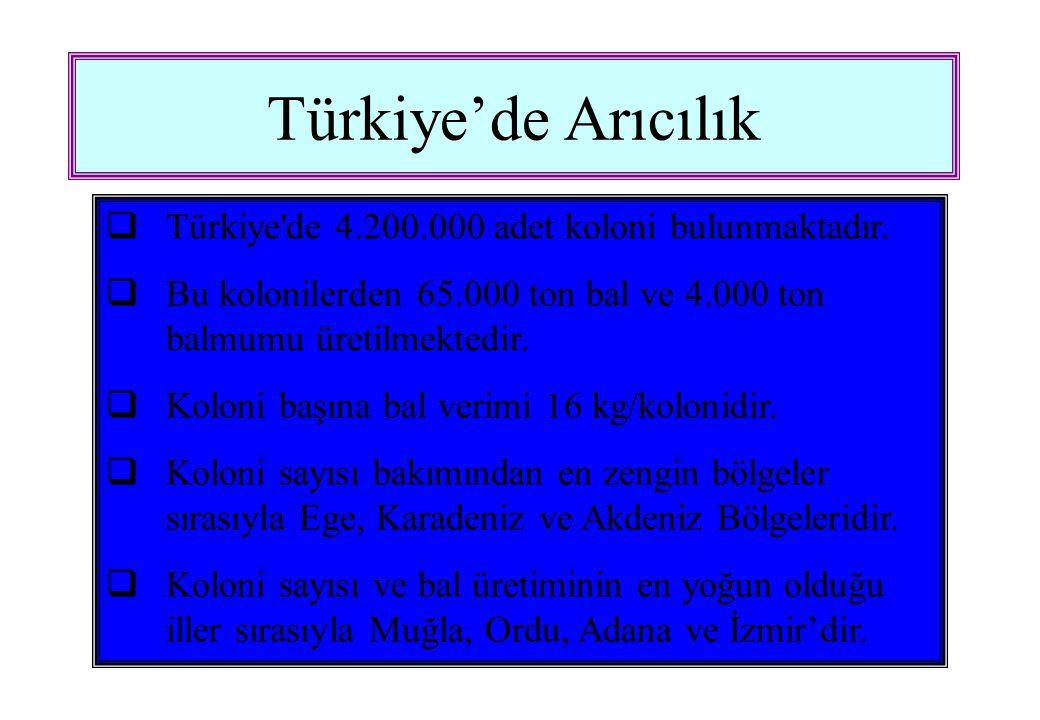 Türkiye'de Arıcılık  Türkiye de 4.200.000 adet koloni bulunmaktadır.