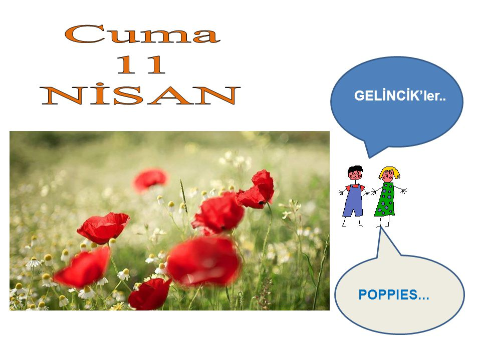 GELİNCİK'ler.. POPPIES...