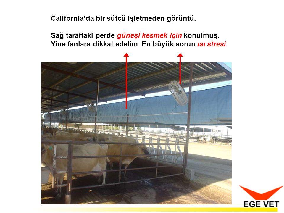 California'da bir sütçü işletmeden görüntü.Sağ taraftaki perde güneşi kesmek için konulmuş.