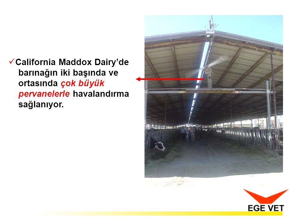  California Maddox Dairy'de barınağın iki başında ve ortasında çok büyük pervanelerle havalandırma sağlanıyor.