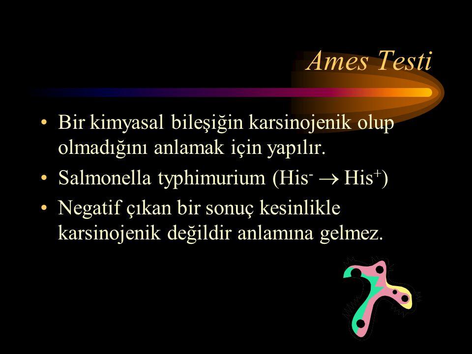 Ames Testi •Bir kimyasal bileşiğin karsinojenik olup olmadığını anlamak için yapılır. •Salmonella typhimurium (His -  His + ) •Negatif çıkan bir sonu