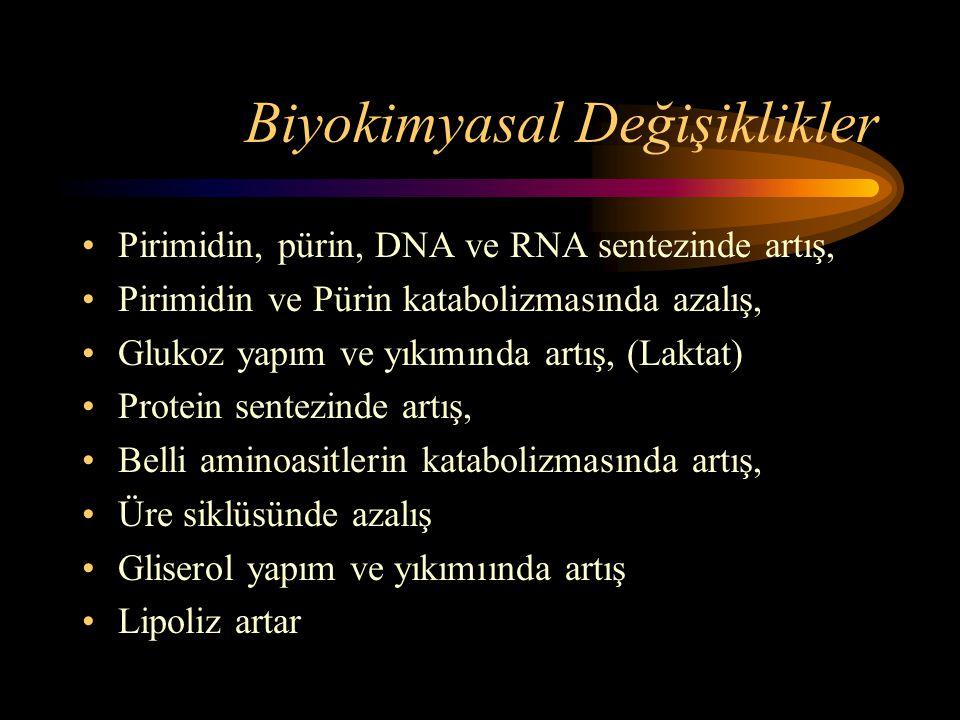 Biyokimyasal Değişiklikler •Pirimidin, pürin, DNA ve RNA sentezinde artış, •Pirimidin ve Pürin katabolizmasında azalış, •Glukoz yapım ve yıkımında art