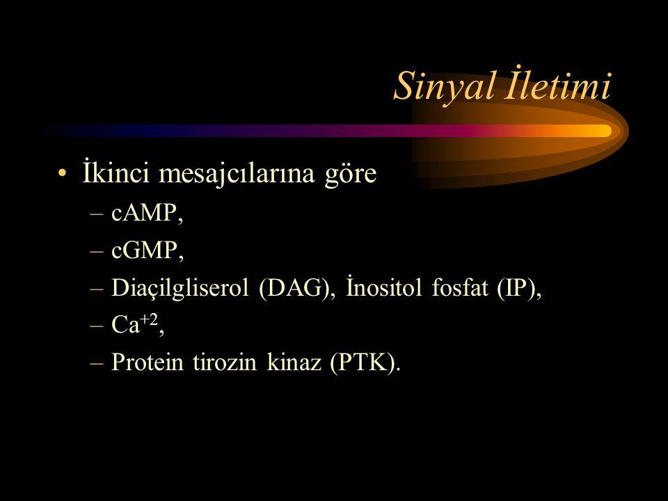 Sinyal İletimi •İkinci mesajcılarına göre –cAMP, –cGMP, –Diaçilgliserol (DAG), İnositol fosfat (IP), –Ca +2, –Protein tirozin kinaz (PTK).