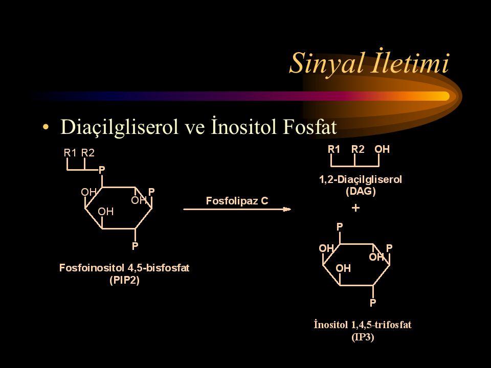 Sinyal İletimi •Diaçilgliserol ve İnositol Fosfat