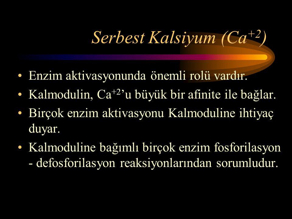 Serbest Kalsiyum (Ca +2 ) •Enzim aktivasyonunda önemli rolü vardır. •Kalmodulin, Ca +2 'u büyük bir afinite ile bağlar. •Birçok enzim aktivasyonu Kalm