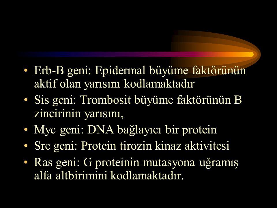 •Erb-B geni: Epidermal büyüme faktörünün aktif olan yarısını kodlamaktadır •Sis geni: Trombosit büyüme faktörünün B zincirinin yarısını, •Myc geni: DN