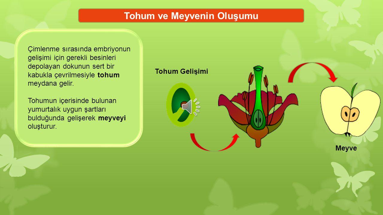 Tozlaşma ve Döllenme Çiçekte bulunan erkek organdaki polenlerin dişi organın tepeciğine taşınmasına tozlaşma denir.