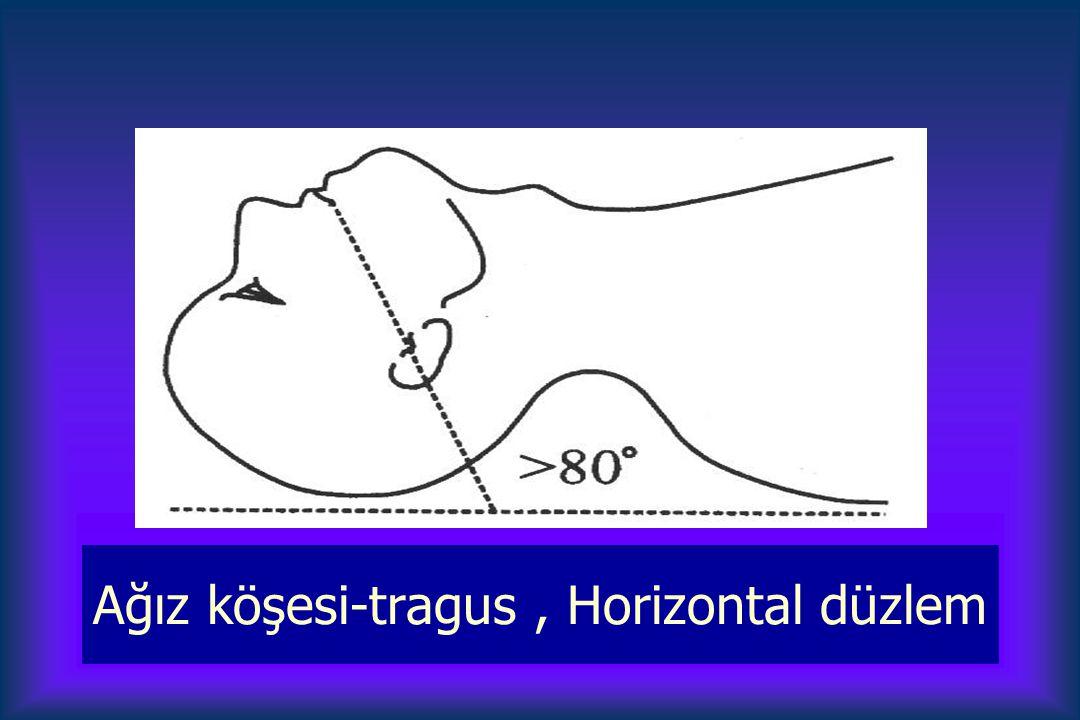 Ağız köşesi-tragus, Horizontal düzlem