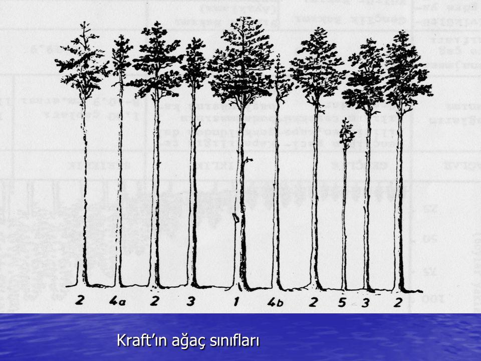 Kraft'ın ağaç sınıfları