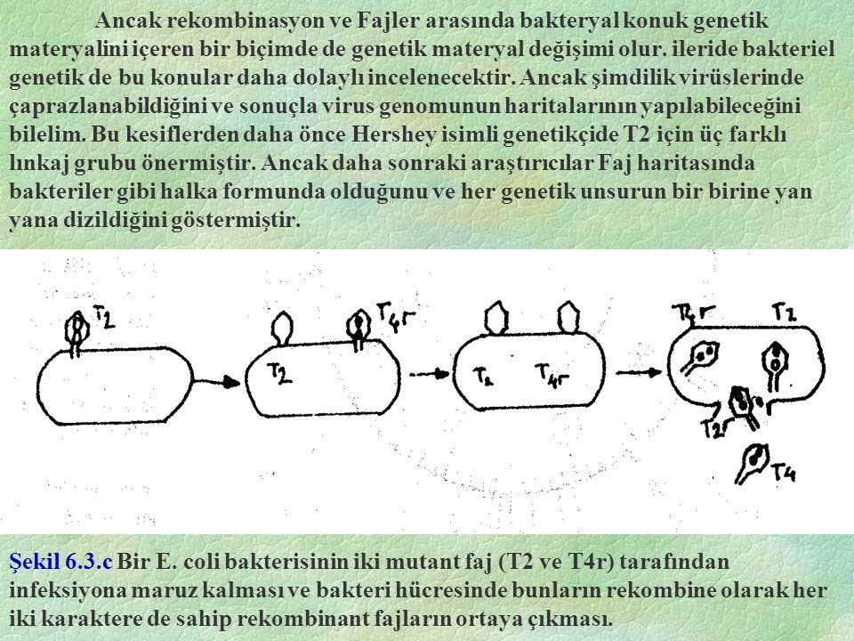 Ancak rekombinasyon ve Fajler arasında bakteryal konuk genetik materyalini içeren bir biçimde de genetik materyal değişimi olur.