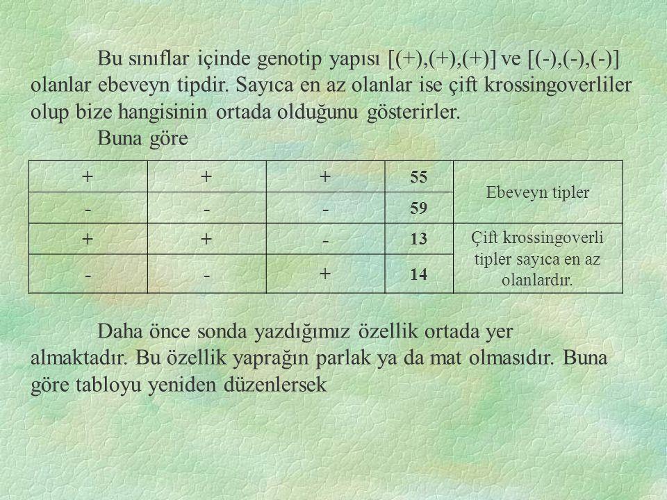 Bu sınıflar içinde genotip yapısı [(+),(+),(+)] ve [(-),(-),(-)] olanlar ebeveyn tipdir.