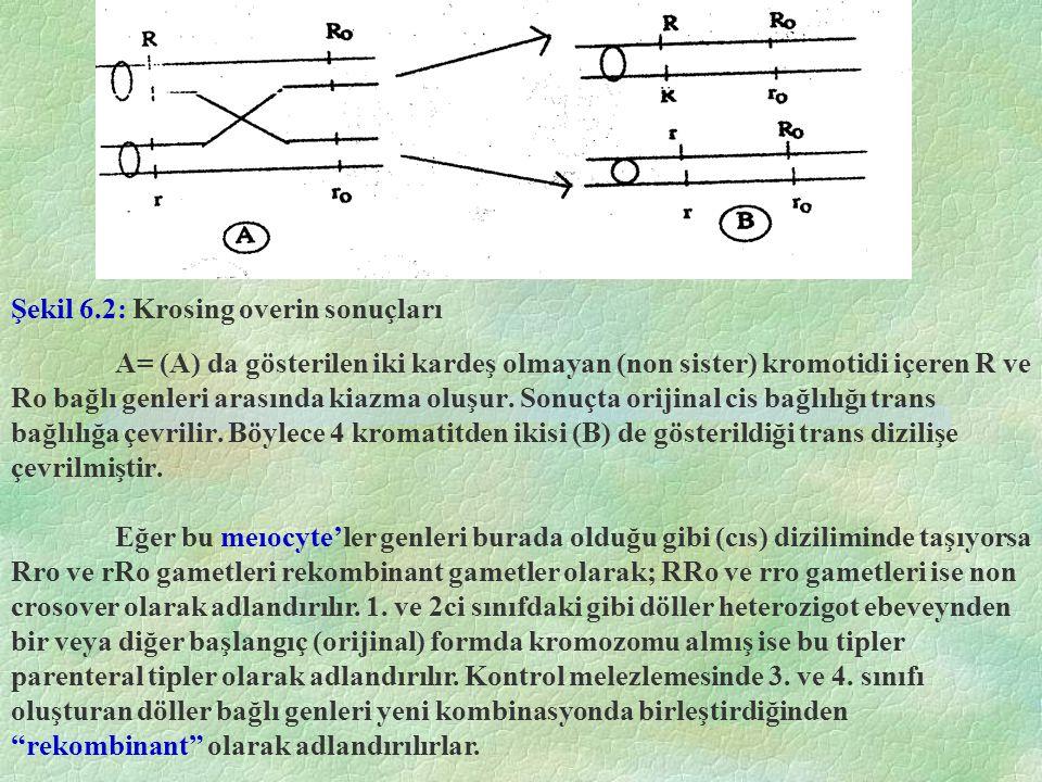 Örnek: Mısır bitkisinde aşağıda tanımlanan 3 farklı özelliğin aynı kromozom üzerinde bağlı genler olduğu bilinmektedir.