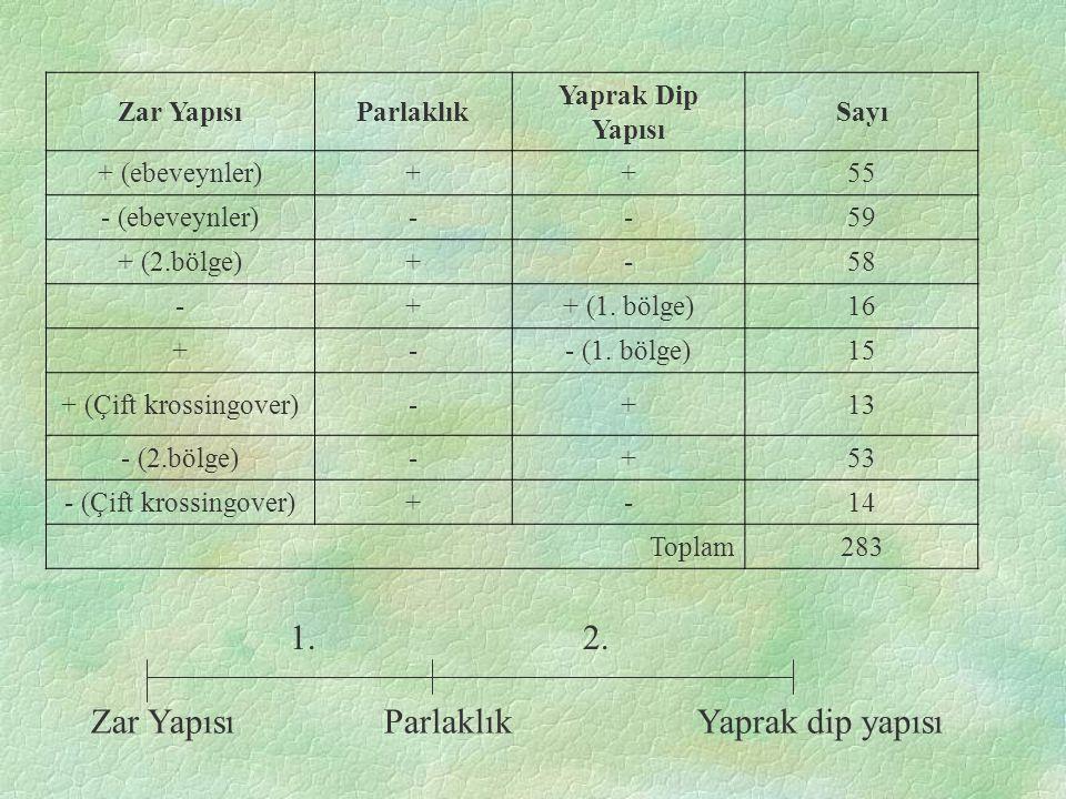 Zar YapısıParlaklık Yaprak Dip Yapısı Sayı + (ebeveynler)++55 - (ebeveynler)--59 + (2.bölge)+-58 -++ (1.